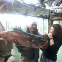 Рыба и дочь.