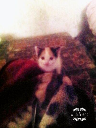 Фото мужчины миша, Астрахань, Россия, 26